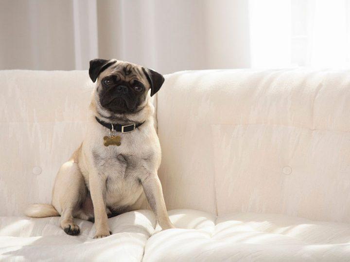 Tejidos recomendados para convivir con mascotas